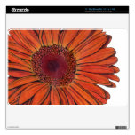 """Gerbera 11"""" piel del aire de MacBook Skin Para El MacBook Air"""