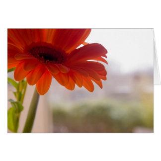 Gerbera #37 - note card