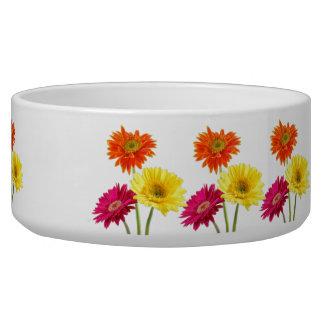 Gerbera Daisies Bowl