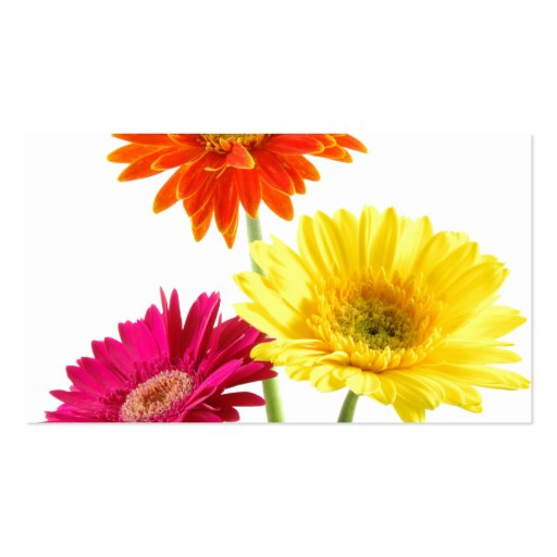 Gerbera Daisies Double-Sided Standard Business Cards (Pack Of 100)