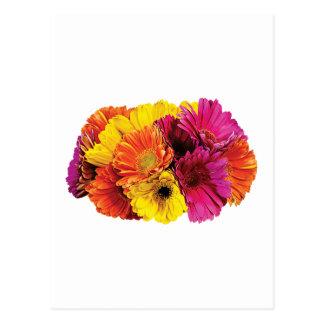 Gerbera Daisies Mixed Colors Postcard