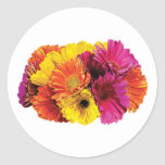 Gerbera Daisies Mixed Colors Round Stickers