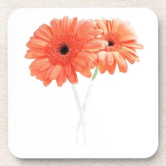 Gerbera Daisies, Orange Coaster