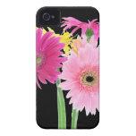 Gerbera Daisies Pink iPhone 4 Case-Mate Cases