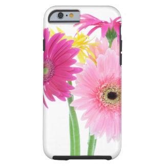 Gerbera Daisies Pink Tough iPhone 6 Case