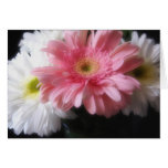 Gerbera Daisy 6 Greeting Card