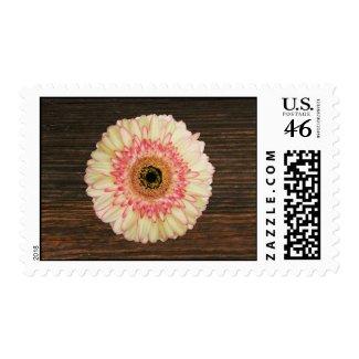 Gerbera Daisy & Barnwood Postage stamp