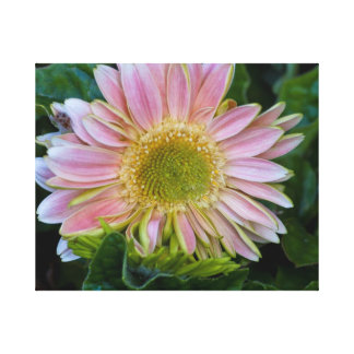 Gerbera Daisy Canvas Gallery Wrapped Print Gallery Wrapped Canvas