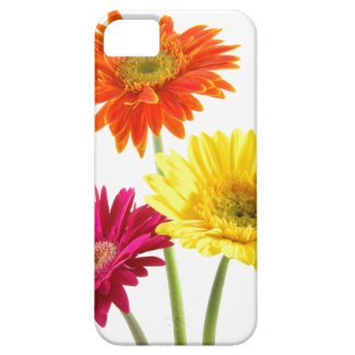 Gerbera Daisy Delight Iphone 5 Covers