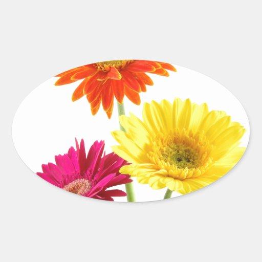 Gerbera Daisy Delight Oval Stickers
