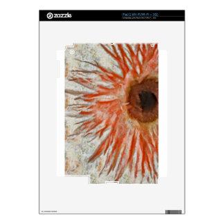 Gerbera Daisy Eye iPad 2 Decals