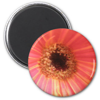 Gerbera Daisy Flower Magnet