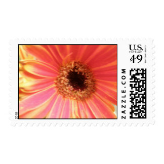 Gerbera Daisy Flower Postage Stamps