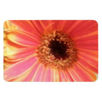 Gerbera Daisy Flower Premium Magnet