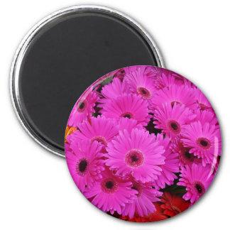 Gerbera Daisy Flowers 2 Inch Round Magnet
