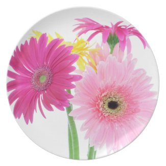 Gerbera Daisy Flowers Dinner Plate