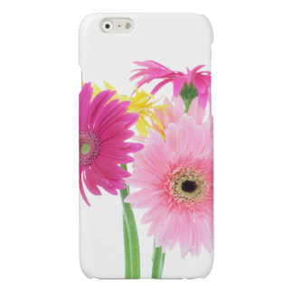 Gerbera Daisy Flowers Glossy iPhone 6 Case