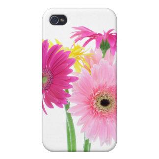 Gerbera Daisy Flowers iPhone 4/4S Cases