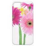 Gerbera Daisy Flowers iPhone 5 Cases