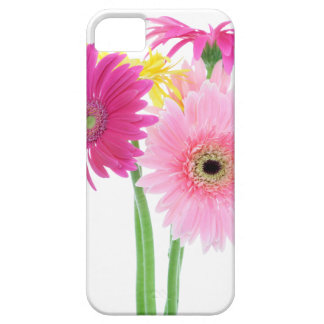Gerbera Daisy Flowers iPhone SE/5/5s Case