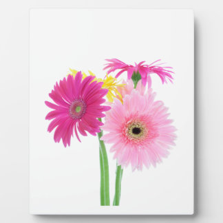 Gerbera Daisy Flowers Plaque