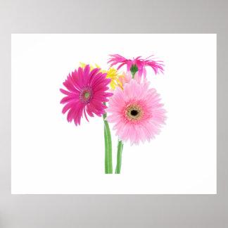 Gerbera Daisy Flowers Posters