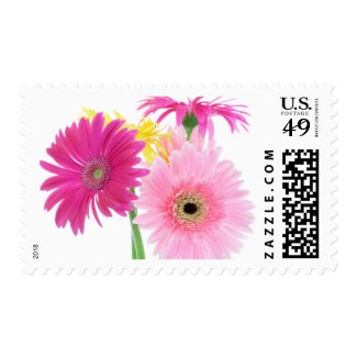 Gerbera Daisy Flowers Stamps