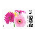 Gerbera Daisy Flowers Stamps
