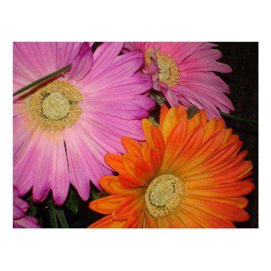 Gerbera Daisy Garden Postcard