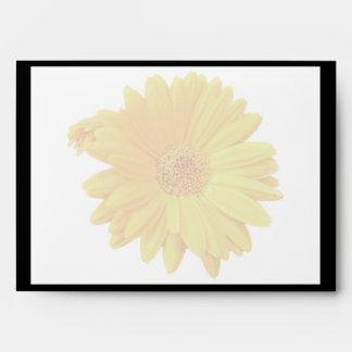 Gerbera Daisy (Gerbera hybrida) - Yellow Envelope