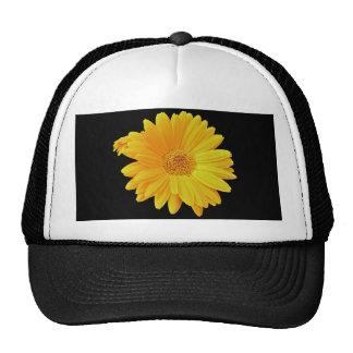 Gerbera Daisy (Gerbera hybrida) - Yellow Trucker Hat