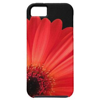 Gerbera Daisy iPhone SE/5/5s Case