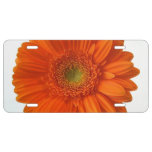 Gerbera Daisy License Plate