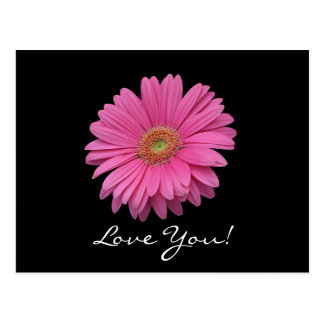 Gerbera Daisy Love You Postcard