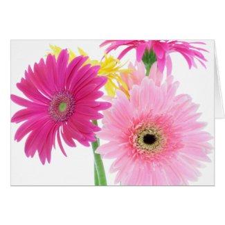 Gerbera Daisy Piink Flowers Cards