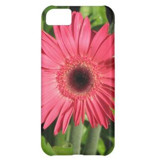 Gerbera Daisy Pink iPhone 5C Case