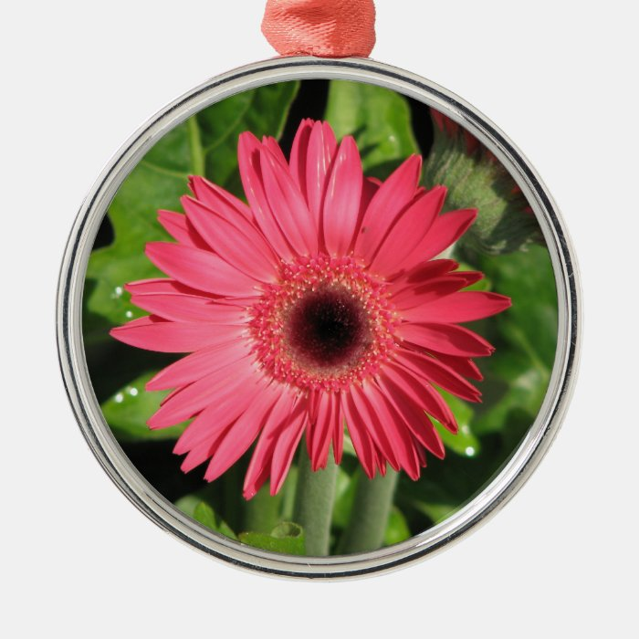Gerbera Daisy Pink Metal Ornament