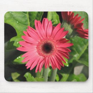 Gerbera Daisy Pink Mouse Pad