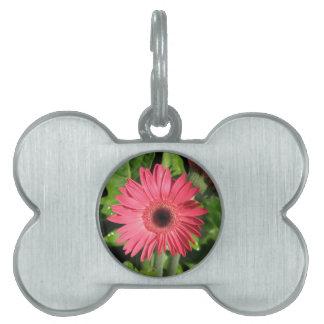 Gerbera Daisy Pink Pet ID Tags