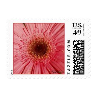 Gerbera Daisy Postage Stamp