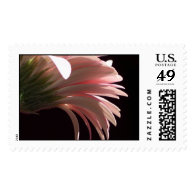 gerbera daisy postage stamps