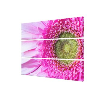 Gerbera Daisy Triptych Canvas Wall Art