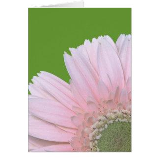 Gerbera Diasy Greeting Cards