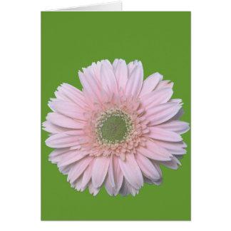 Gerbera Diasy Card