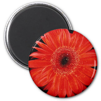 Gerbera flowers 2 inch round magnet