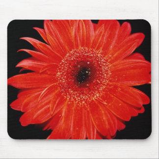 Gerbera flowers mouse pad