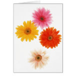 Gerbera Flowers Print Floating Flower Daisy Floral Stationery Note Card