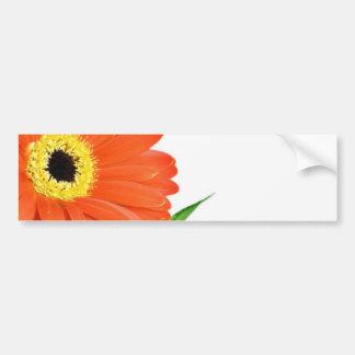 Gerbera On White Background Bumper Sticker