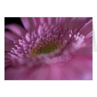 Gerbera Pink Close Card