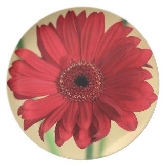Gerbera Plate
